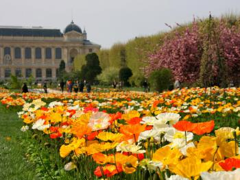 Jardin-2.jpg